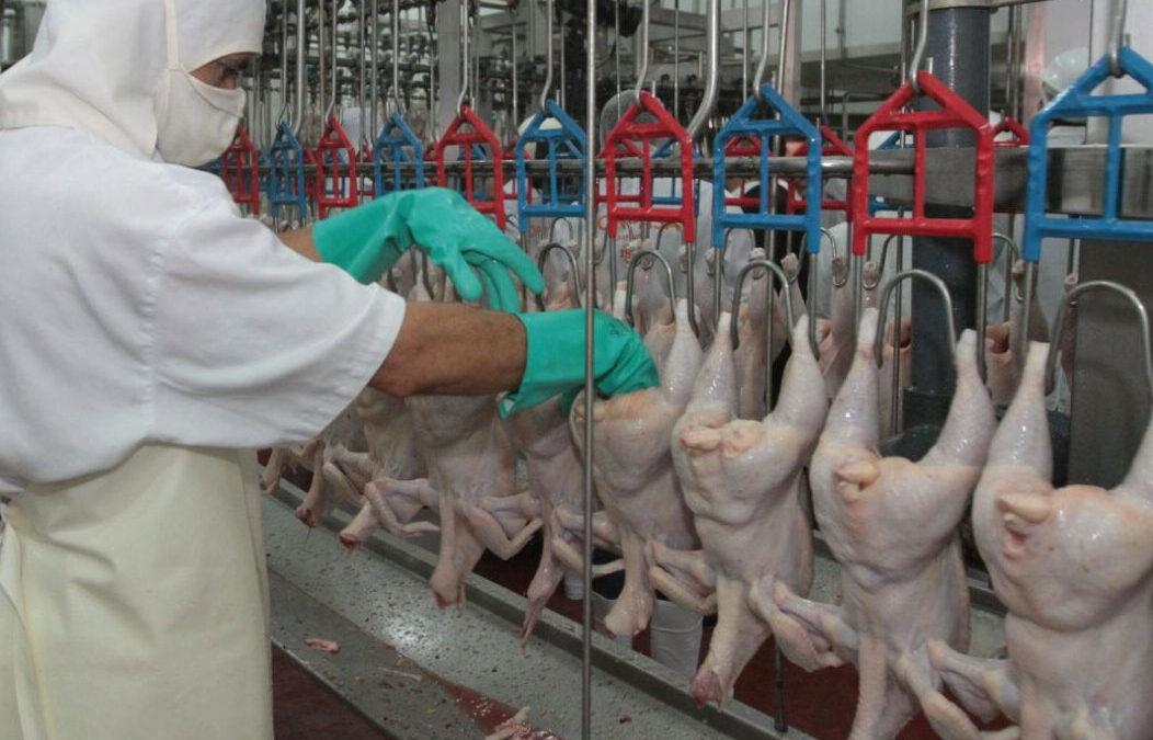 Hormonas en pollos, desmienten su uso en Paraguay